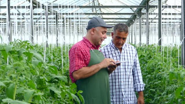 4K Two men using digital tablet in greenhouse video