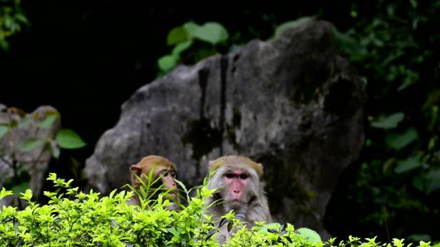two monkeys doing nothing - reso video stock e b–roll