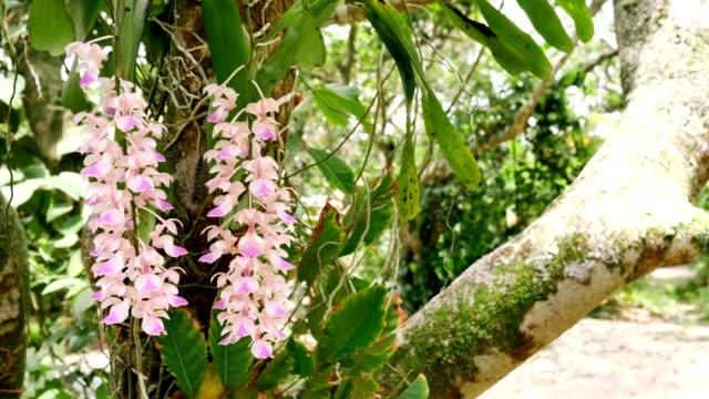 zwei orchidee blüht ultra hd - orchidee stock-videos und b-roll-filmmaterial