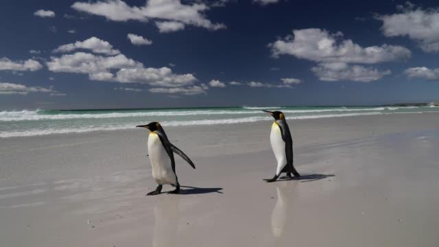 ビーチの上を歩く 2 つのペンギン - 2匹点の映像素材/bロール