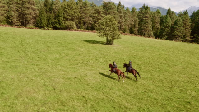 AERIAL Two people riding running horses in the meadow Aerial shot of two horseback riders riding their galloping horse across meadow on a sunny day. horseback riding stock videos & royalty-free footage