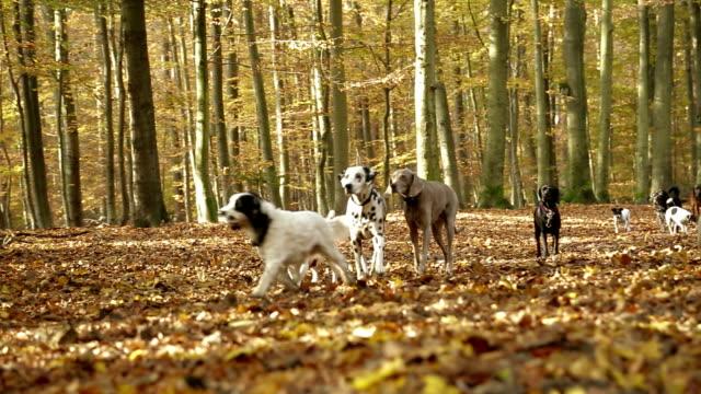 zwei menschen the dogs - hundesitter stock-videos und b-roll-filmmaterial