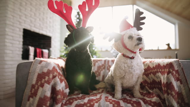 two puppy friends celebrating christmas - cena di natale video stock e b–roll