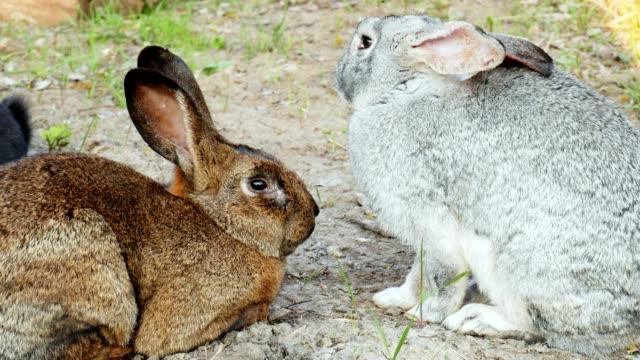 zwei kaninchen liegen auf dem gras, schlafen in nahaufnahme aufeinander ein - nutztier oder haustier stock-videos und b-roll-filmmaterial