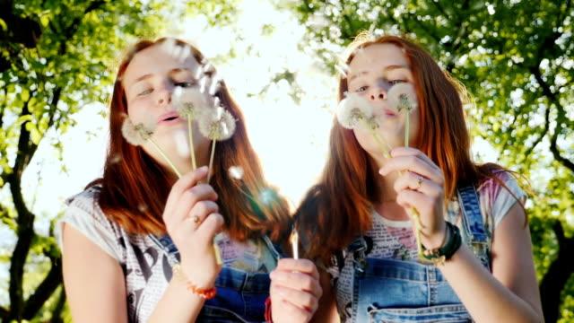 Two red twin sisters are playing with dandelion flowers. The fans are blowing on them, their hair highlights the sun. Cheerful frame, a happy childhood. 180 fps slow motion video video