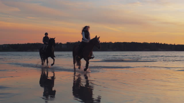 Two Riders on Horses at Beach in Sunset Light. Two Riders on Horses at Beach in Sunset Light. horseback riding stock videos & royalty-free footage