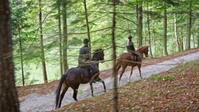 ds 2 人のライダーは森の中でトロッティング馬に乗って - 動物に乗る点の映像素材/bロール