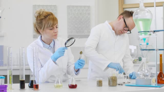 Two scientist inspecting marijuana bud and CBD oil in laboratory Two scientists looking closely on marijuana bud in pharmaceutical laboratory. CBD and CBDa oils are in graduated cylinders and erlenmeyer flasks on table. Hemp seeds are in beakers. cbd oil stock videos & royalty-free footage