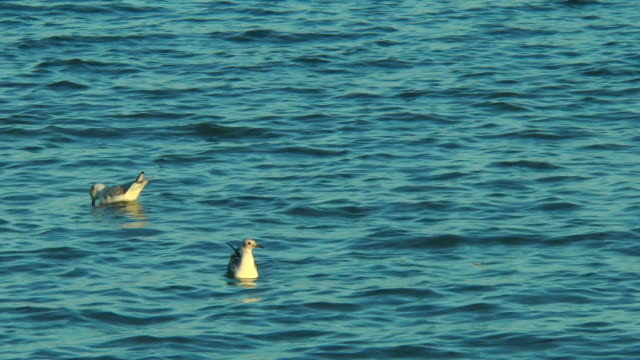 Two seagulls floating in the sea