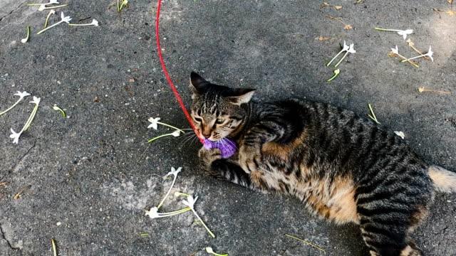 vídeos de stock e filmes b-roll de two shots of grey tabby cat playing with cat toy - felino