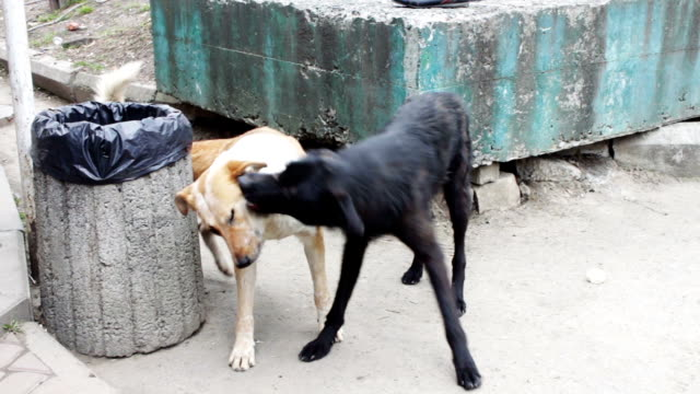 Two stray dogs outdoors play video