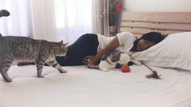Two tabby cats sleep with woman in cozy white bedroom interior