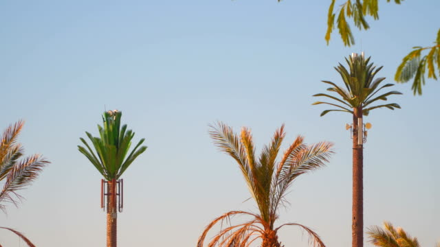 Two Telephone tower in the form of a palm tree video