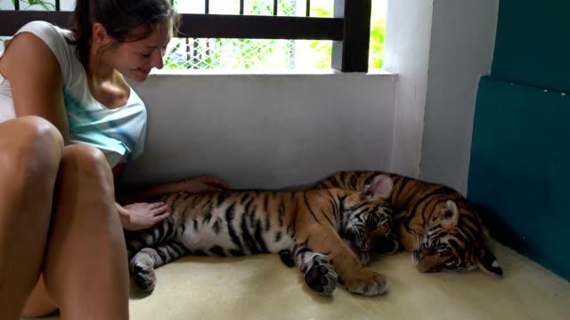 två tiger cub doze. nästa, en kvinna sitter och smeker dem - pet bottles bildbanksvideor och videomaterial från bakom kulisserna
