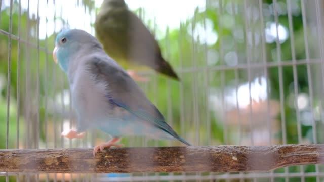 i̇ki küçük papağan kafesin içine ahşap üzerine - kafes sınırlı alan stok videoları ve detay görüntü çekimi