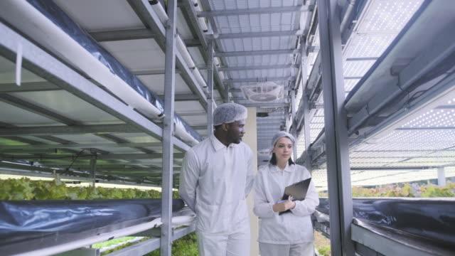 Twee verticale landarbeiders die vooruitgang van LED-verlichte sla controleren video