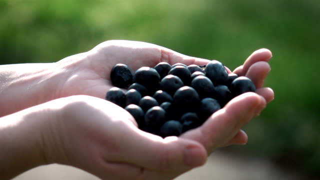 Two videos of hands holding blueberries in real slow motion video