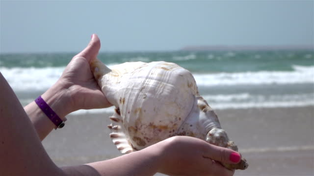 vídeos de stock e filmes b-roll de two videos of hands holding shell by the ocean-slow motion - bugio