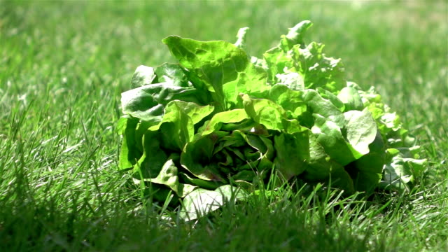 Two videos of lettuce falling on the grass-real slow motion
