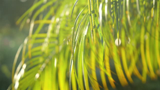 Two videos of palm leaves in 4K video