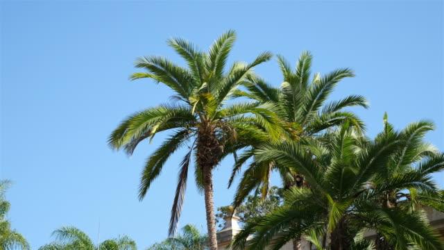 dwóch filmów palm tree w 4 k - palm tree filmów i materiałów b-roll