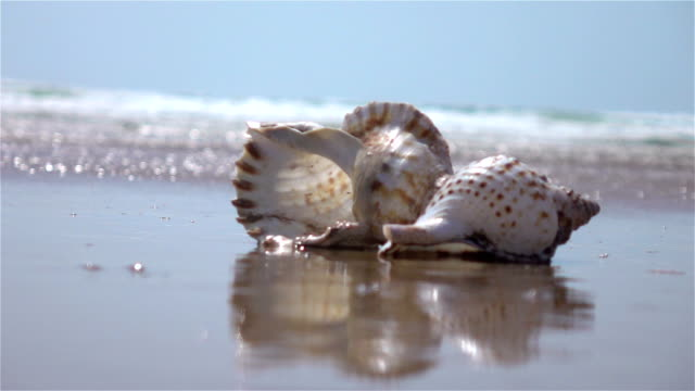Two videos of shell by the ocean-real slow motion Two high quality videos of shell by the ocean in real 1080p slow motion 250fps animal shell stock videos & royalty-free footage