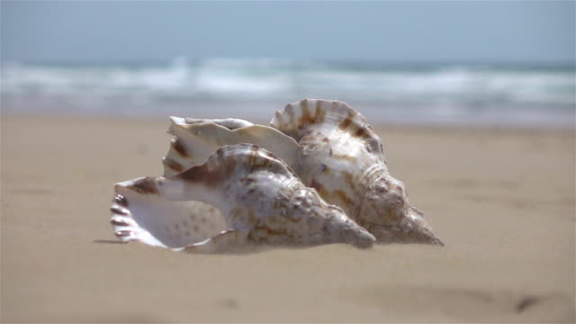 vídeos de stock e filmes b-roll de two videos of shells on the sand-real slow motion - bugio