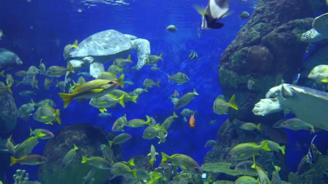 zwei videos von schildkröten in 4 k - riff stock-videos und b-roll-filmmaterial