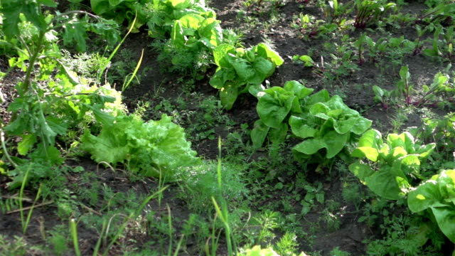 Two videos of vegetable plot in real slow motion video