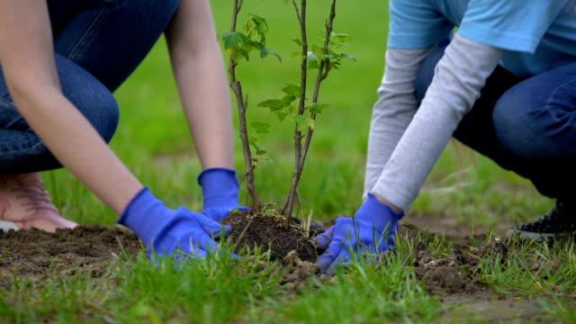 dwóch wolontariuszy sadzenia drzewa razem, udział w projekcie środowiskowym - drzewo filmów i materiałów b-roll