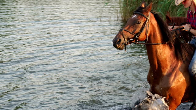 two women bathe with the horses in the lake. - briglia video stock e b–roll