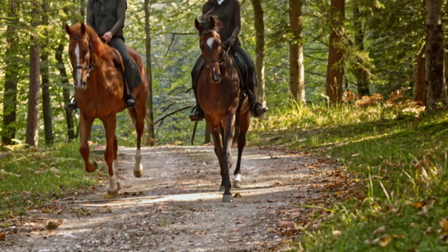 SLO MO TD Two women cantering on brown horses through forest video