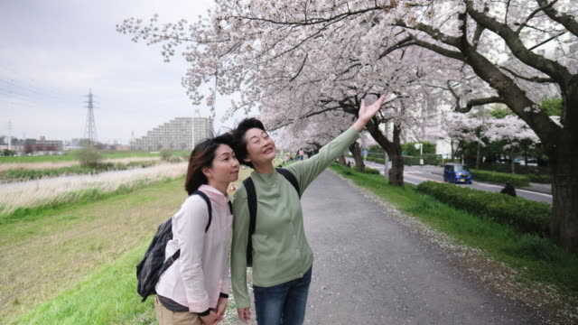 Two women looking at cherry blossoms