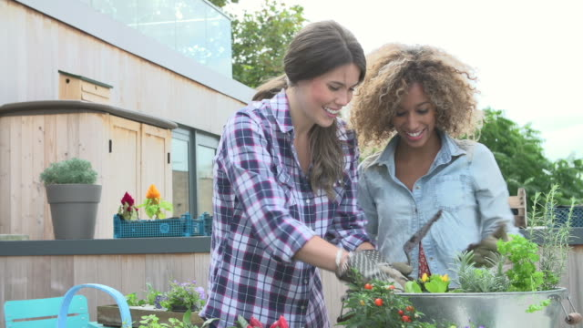 Two Women Planting Rooftop Garden Together video