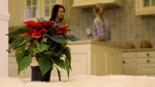 Two women talks at the kitchen at the background of christmas flower video