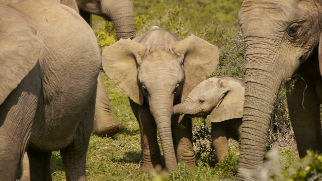 two young elephants video