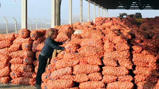 Two Young Farmers in Agricultural Warehouse Farmers carrying onion mash bags in agricultural warehouse. HD 1080i. Canon EOS 550D. red onions stock videos & royalty-free footage