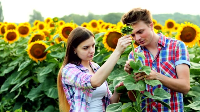 Two young farmers inspect the harvest, man and woman in the agrarian sphere, talking in a field