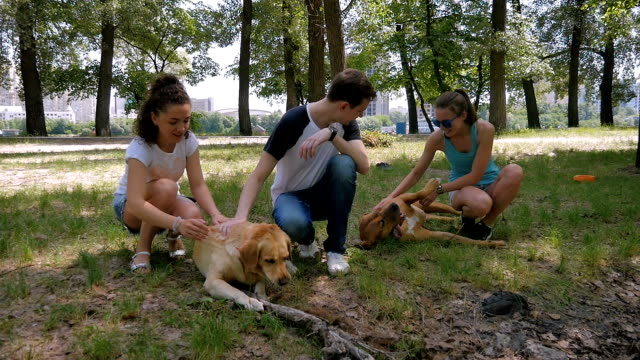 Two young girls and guy caress dogs on the grass video