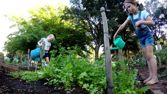 two young girls watering the vegetables in the garden - gardening video stock e b–roll