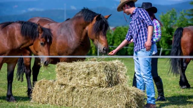 dwóch młodych ludzi żywienia konia. istnieją inne konie na zbyt i są one jedzenie siano. szerokie kąt strzału. dzień jest słonecznie i piękne. - grzywa filmów i materiałów b-roll