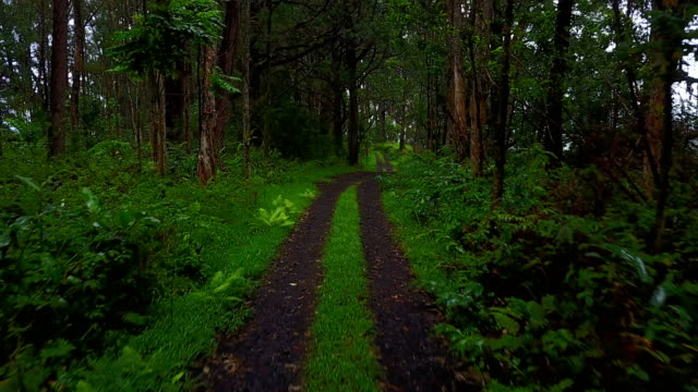Two-Track Dirt Road Running Off into Thick Woods on Maui video