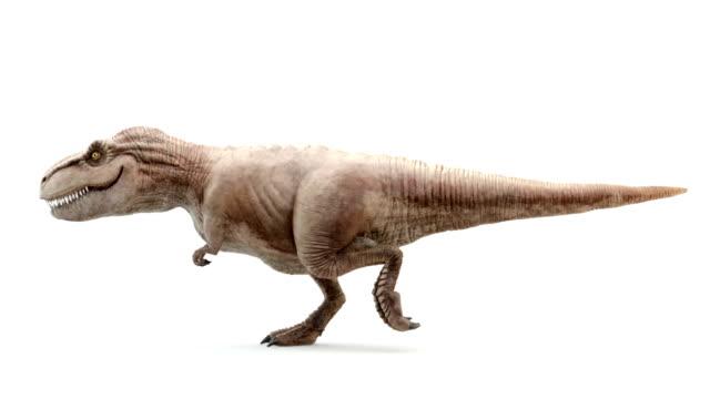 tyrannosaurus rex i rörelse av attack - tyrannosaurus rex bildbanksvideor och videomaterial från bakom kulisserna