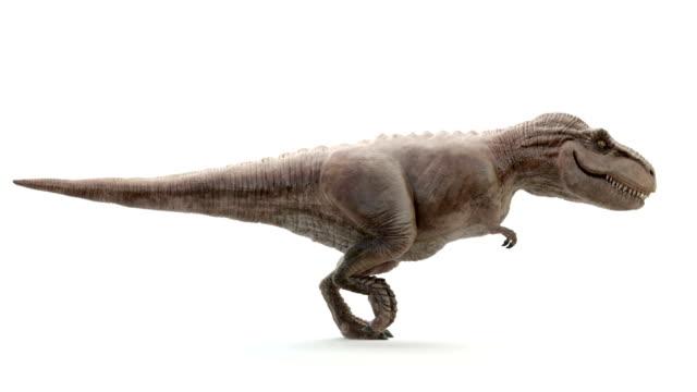 tyrannosaurus rex i rörelse av körning - dinosaurie bildbanksvideor och videomaterial från bakom kulisserna