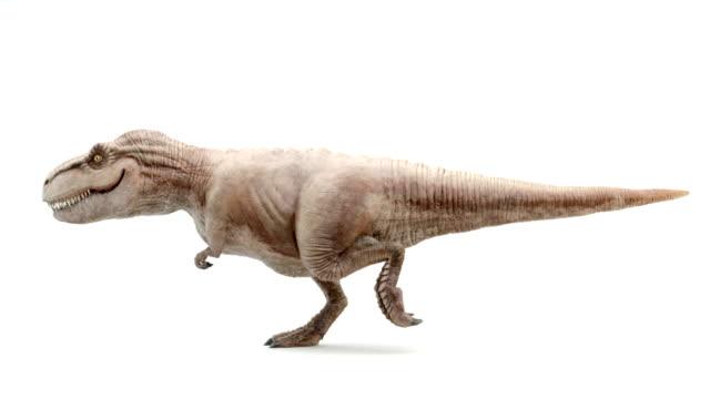 tyrannosaurus rex i rörelse av promenader - tyrannosaurus rex bildbanksvideor och videomaterial från bakom kulisserna