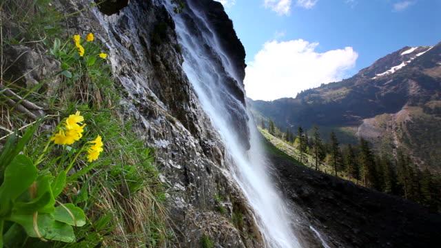 tyrolean cascade with auricula, alps, austria, tirol video