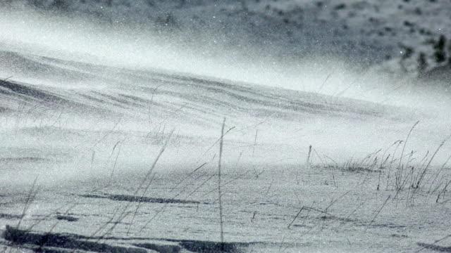 drivande snö, uhd lager video - snöstorm bildbanksvideor och videomaterial från bakom kulisserna