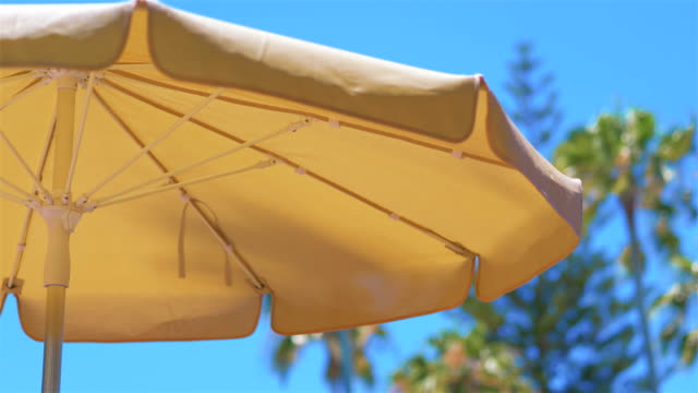 Umbrella surrounded by palm trees in 4k slow motion 60fps