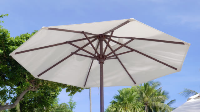 Umbrella with tree on blue sky Umbrella with tree on blue sky tropical tree stock videos & royalty-free footage