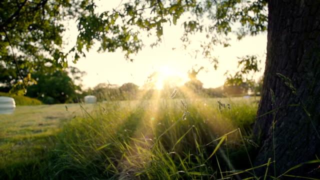 Under An English Oak Tree At Sunset video